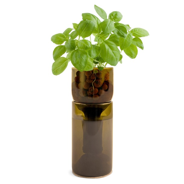 wine bottle herbs #thingsdeeloves 1