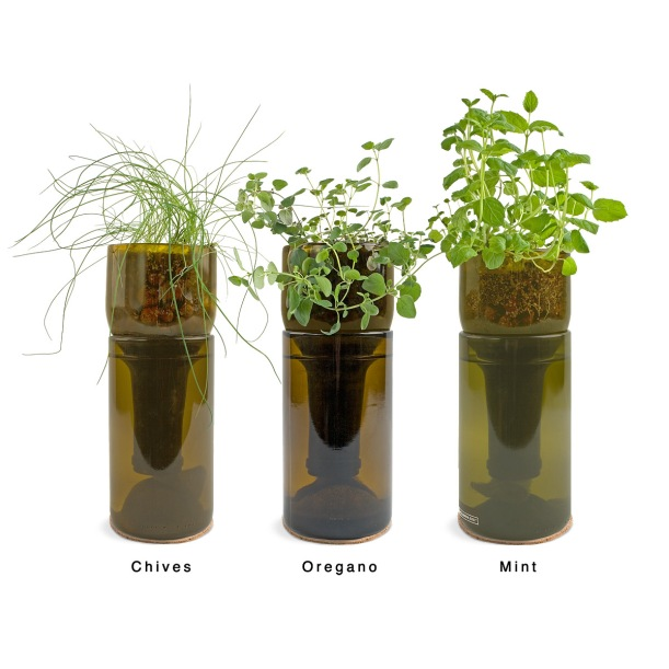 wine bottle herbs #thingsdeeloves 3